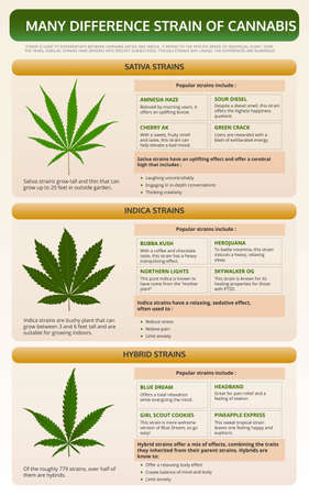Many Different Strains of Cannabis vertical textbook infographic illustration about cannabis as herbal alternative medicine and chemical therapy, healthcare and medical science vector.