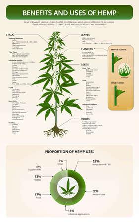 Beneficios y usos de la ilustración infográfica del libro de texto vertical de cáñamo sobre el cannabis como medicina alternativa a base de hierbas y terapia química, salud y vector de ciencia médica.