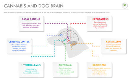Cannabis and Dog Brain horizontal business infographic illustration about cannabis as herbal alternative medicine and chemical therapy, healthcare and medical science vector. Illusztráció
