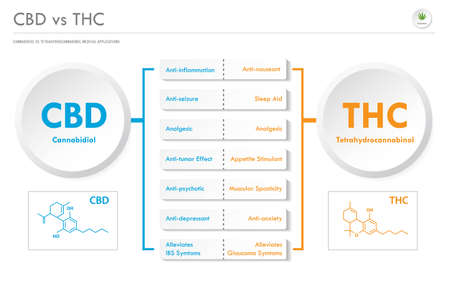 CBD vs THC Medical Applications horizontal infographic illustration about cannabis as herbal alternative medicine and chemical therapy, healthcare and medical science vector.