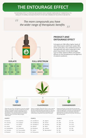 The Entourage Effect vertical textbook infographic illustration about cannabis as herbal alternative medicine and chemical therapy, healthcare and medical science vector.