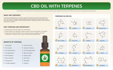 CBD Oil with Terpenes horizontal textbook infographic illustration about cannabis as herbal alternative medicine and chemical therapy, healthcare and medical science vector.