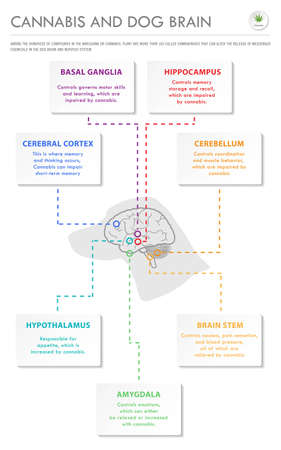 Cannabis and Dog Brain vertical business infographic illustration about cannabis as herbal alternative medicine and chemical therapy, healthcare and medical science vector. Stock Illustratie