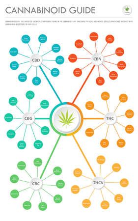 Cannabinoid Guide vertical business infographic illustration about cannabis as herbal alternative medicine and chemical therapy, healthcare and medical science vector.