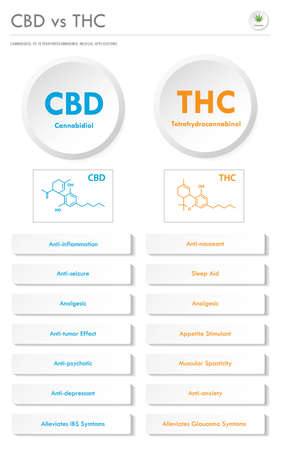 CBD vs THC Medical Applications vertical business infographic illustration about cannabis as herbal alternative medicine and chemical therapy, healthcare and medical science vector. Illustration