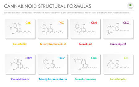 Cannabinoid Structural Formulas horizontal business infographic illustration about cannabis as herbal alternative medicine and chemical therapy, healthcare and medical science vector. Illustration