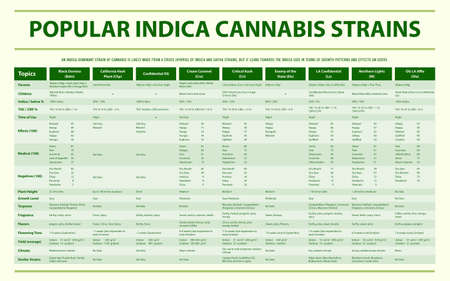 Popular Indica Cannabis Strains horizontal infographic illustration about cannabis as herbal alternative medicine and chemical therapy, healthcare and medical science vector.
