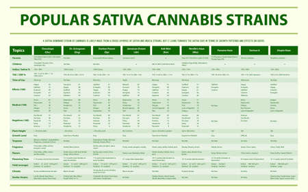 Popular Sativa Cannabis Strains horizontal infographic illustration about cannabis as herbal alternative medicine and chemical therapy, healthcare and medical science vector.