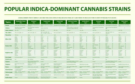 Popular Indica Dominant Cannabis Strains horizontal infographic illustration about cannabis as herbal alternative medicine and chemical therapy, healthcare and medical science vector.