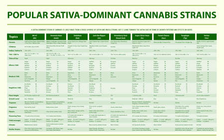 Popular Sativa Dominant Cannabis Strains horizontal infographic illustration about cannabis as herbal alternative medicine and chemical therapy, healthcare and medical science vector. Illustration