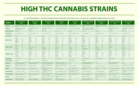 High THC Cannabis Strains horizontal infographic illustration about cannabis as herbal alternative medicine and chemical therapy, healthcare and medical science vector. Illustration