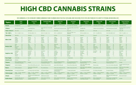 High CBD Cannabis Strains horizontal infographic illustration about cannabis as herbal alternative medicine and chemical therapy, healthcare and medical science vector.