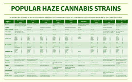 Popular Haze Cannabis Strains horizontal infographic illustration about cannabis as herbal alternative medicine and chemical therapy, healthcare and medical science vector.