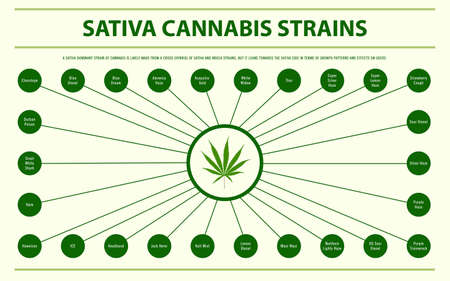 Sativa Cannabis Strains horizontal infographic illustration about cannabis as herbal alternative medicine and chemical therapy, healthcare and medical science vector.