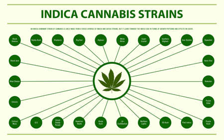 Indica Cannabis Strains horizontal infographic illustration about cannabis as herbal alternative medicine and chemical therapy, healthcare and medical science vector.