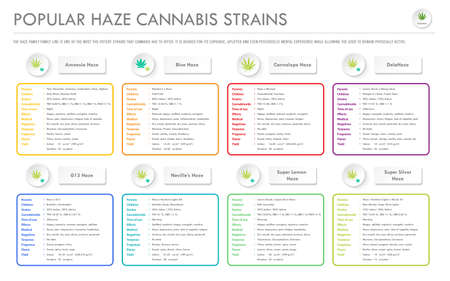 Popular Haze Cannabis Strains horizontal business infographic illustration about cannabis as herbal alternative medicine and chemical therapy, healthcare and medical science vector. Illustration
