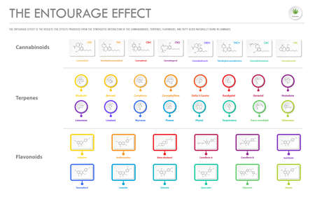 The Entourage Effect with Structural Formulas horizontal business infographic illustration about cannabis as herbal alternative medicine and chemical therapy, healthcare and medical science vector.