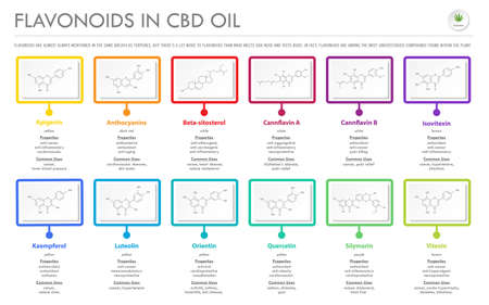 Flavonoids in CBD Oil with Structural Formulas horizontal business infographic illustration about cannabis as herbal alternative medicine and chemical therapy, healthcare and medical science vector.