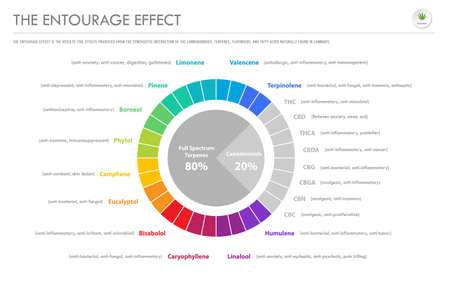 The Entourage Effect Proportion horizontal business infographic illustration about cannabis as herbal alternative medicine and chemical therapy, healthcare and medical science vector.