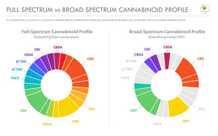 Full Spectrum vs Broad Spectrum Cannabinoid Profile horizontal business infographic illustration about cannabis as herbal alternative medicine and chemical therapy, healthcare and medical science vector.