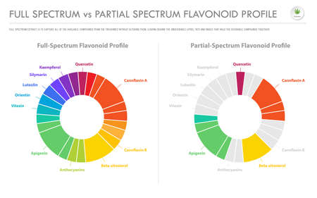 Full Spectrum vs Partial Spectrum Flavonoid Profile horizontal business infographic illustration about cannabis as herbal alternative medicine and chemical therapy, healthcare and medical science vector. Illustration