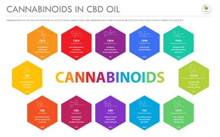 Cannabinoids in CBD Oil with Structural Formulas horizontal business infographic illustration about cannabis as herbal alternative medicine and chemical therapy, healthcare and medical science vector.