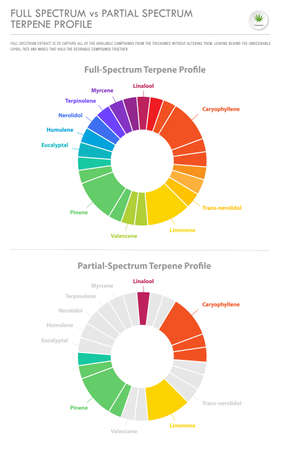 Full Spectrum vs Partial Spectrum Terpene Profile vertical business infographic illustration about cannabis as herbal alternative medicine and chemical therapy, healthcare and medical science vector.