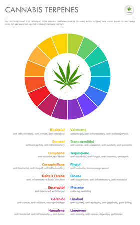 Cannabis Terpenes vertical business infographic illustration about cannabis as herbal alternative medicine and chemical therapy, healthcare and medical science vector. Illustration