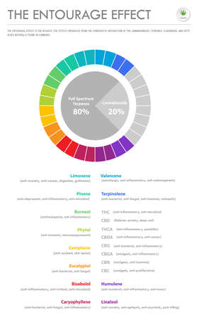 The Entourage Effect Proportion vertical business infographic illustration about cannabis as herbal alternative medicine and chemical therapy, healthcare and medical science vector. Illustration
