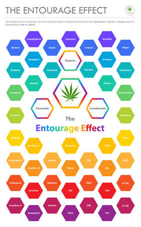 The Entourage Effect Overview vertical business infographic illustration about cannabis as herbal alternative medicine and chemical therapy, healthcare and medical science vector. Stock Illustratie