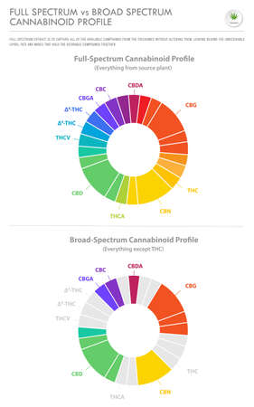Full Spectrum vs Broad Spectrum Cannabinoid Profile vertical business infographic illustration about cannabis as herbal alternative medicine and chemical therapy, healthcare and medical science vector. Illustration