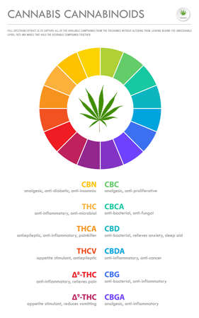Cannabis Cannabinoids vertical business infographic illustration about cannabis as herbal alternative medicine and chemical therapy, healthcare and medical science vector.