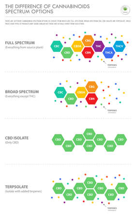 The Difference of Cannabinoids Spectrum Options vertical business infographic illustration about cannabis as herbal alternative medicine and chemical therapy, healthcare and medical science vector. Illustration