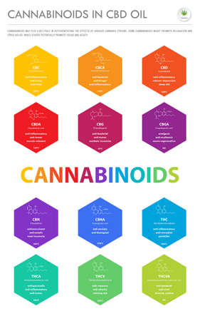 Cannabinoids in CBD Oil with Structural Formulas vertical business infographic illustration about cannabis as herbal alternative medicine and chemical therapy, healthcare and medical science vector.