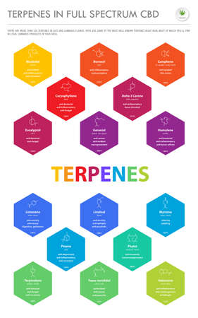 Terpenes in Full Spectrum CBD with Structural Formulas vertical business infographic illustration about cannabis as herbal alternative medicine and chemical therapy, healthcare and medical science vector. Stock Illustratie