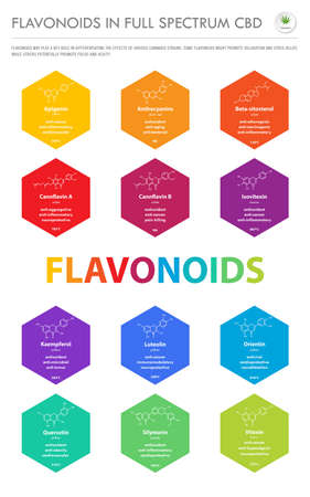 Flavonoids in Full Spectrum CBD with Structural Formulas vertical business infographic illustration about cannabis as herbal alternative medicine and chemical therapy, healthcare and medical science vector.