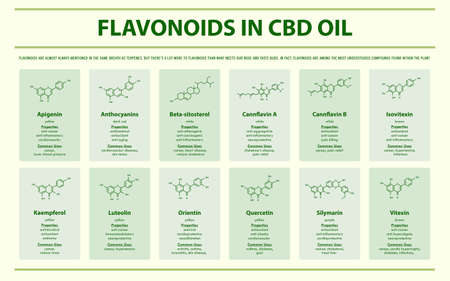 Flavonoids in CBD Oil with Structural Formulas horizontal infographic illustration about cannabis as herbal alternative medicine and chemical therapy, healthcare and medical science vector.