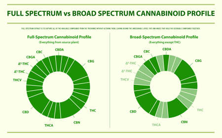 Full Spectrum vs Broad Spectrum Cannabinoid Profile horizontal infographic illustration about cannabis as herbal alternative medicine and chemical therapy, healthcare and medical science vector.