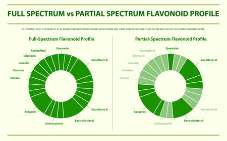 Full Spectrum vs Partial Spectrum Flavonoid Profile horizontal infographic illustration about cannabis as herbal alternative medicine and chemical therapy, healthcare and medical science vector. Stock Illustratie