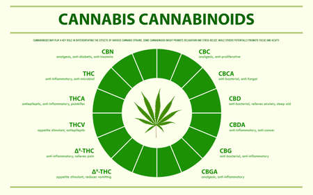 Cannabis Cannabinoids horizontal infographic illustration about cannabis as herbal alternative medicine and chemical therapy, healthcare and medical science vector.