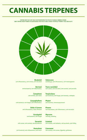 Cannabis Terpenes vertical infographic illustration about cannabis as herbal alternative medicine and chemical therapy, healthcare and medical science vector.