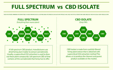 Full Spectrum vs CBD Isolate horizontal infographic illustration about cannabis as herbal alternative medicine and chemical therapy, healthcare and medical science vector.