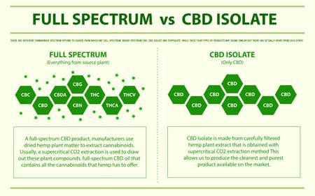 Vollspektrum vs CBD Isolate horizontale Infografik über Cannabis als pflanzliche Alternativmedizin und chemische Therapie, Gesundheitswesen und medizinischer Wissenschaftsvektor.