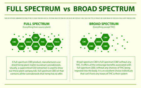 Full Spectrum vs Broad Spectrum horizontal infographic illustration about cannabis as herbal alternative medicine and chemical therapy, healthcare and medical science vector. Vecteurs