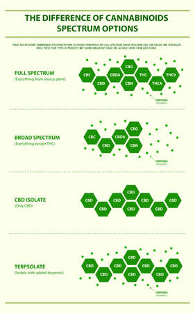 The Difference of Cannabinoids Spectrum Options vertical infographic illustration about cannabis as herbal alternative medicine and chemical therapy, healthcare and medical science vector.