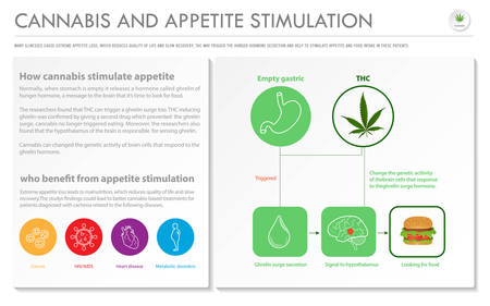 Cannabis and Appetite Stimulation horizontal business infographic illustration about cannabis as herbal alternative medicine and chemical therapy, healthcare and medical science vector.