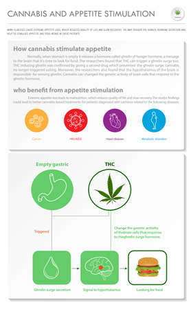 Cannabis and Appetite Stimulation vertical business infographic illustration about cannabis as herbal alternative medicine and chemical therapy, healthcare and medical science vector. 向量圖像