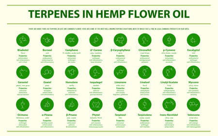 Terpenes in Hemp Flower Oil with Structural Formulas horizontal infographic illustration about cannabis as herbal alternative medicine and chemical therapy, healthcare and medical science vector. 向量圖像