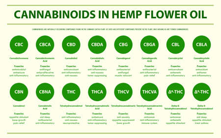 Cannabinoids in Hemp Flower Oil horizontal infographic illustration about cannabis as herbal alternative medicine and chemical therapy, healthcare and medical science vector. 向量圖像