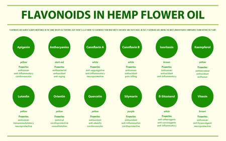 Flavonoids in Hemp Flower Oil horizontal infographic illustration about cannabis as herbal alternative medicine and chemical therapy, healthcare and medical science vector.